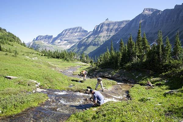 contoh keanekaragaman hayati tingkat ekosistem pada tumbuhan