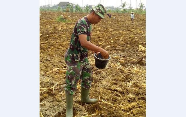 Babinsa Koramil 04/SBB Tanam Jagung di Desa Binaannya Bersama Petani
