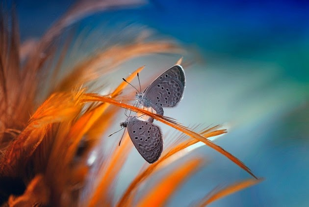 Nordin Seruyan, macro photography, photographs of tiny insects-5