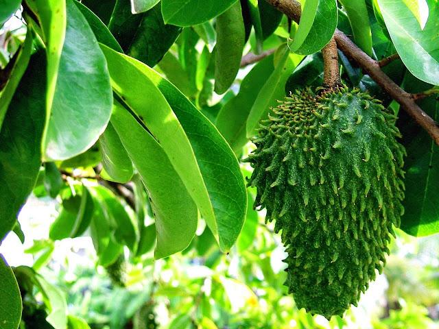 Pengobatan Tradisional untuk Kanker Payudara