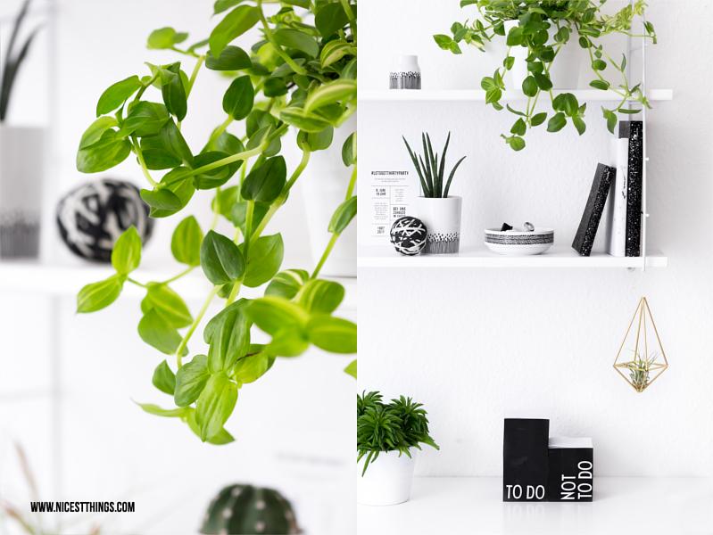 Efeutute Kakteen Sukkulenten Pflanzen am Arbeitsplatz