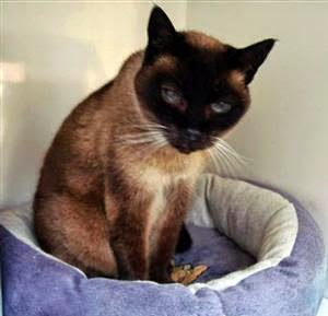 Mandy at the Tenterden Branch of Cats Protection