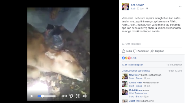 Video Sapi Ucapkan Asma Allah sebelum Disembelih, Gemparkan Netizen