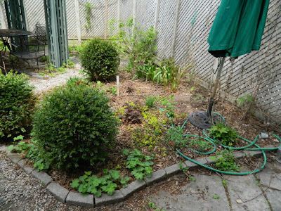 Toronto Spring Garden Cleanup Cabbagetown Before by Paul Jung Gardening Services a Toronto Gardening Company