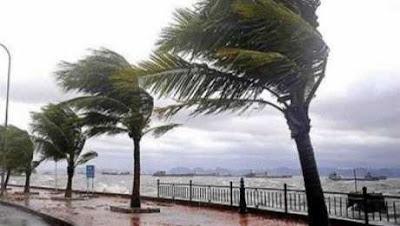 ابتعدوا عن الأشجار 4 نصائح من الأرصاد للمواطنين في موجة الطقس السيئ