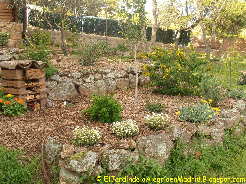 El jard n de la alegr a othonna cheirifolia for El jardin de la alegria cordoba