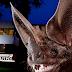 Professor convida vereadores e comunidade para a 'Noite dos Morcegos'