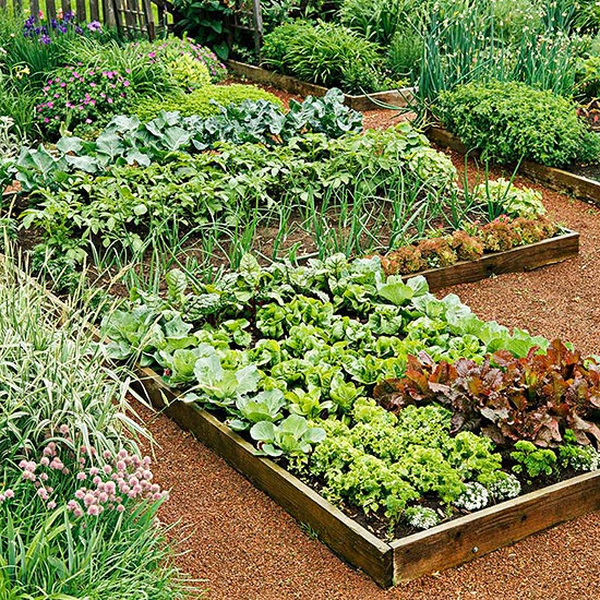 Creating Our First Vegetable Garden Advice Please: Planning Your First Vegetable Garden