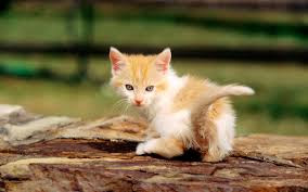 New Baby Cats Animal Hd Wallpaper23