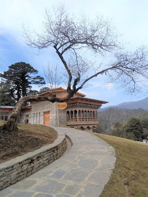 Paro Bhutan Tree Flora