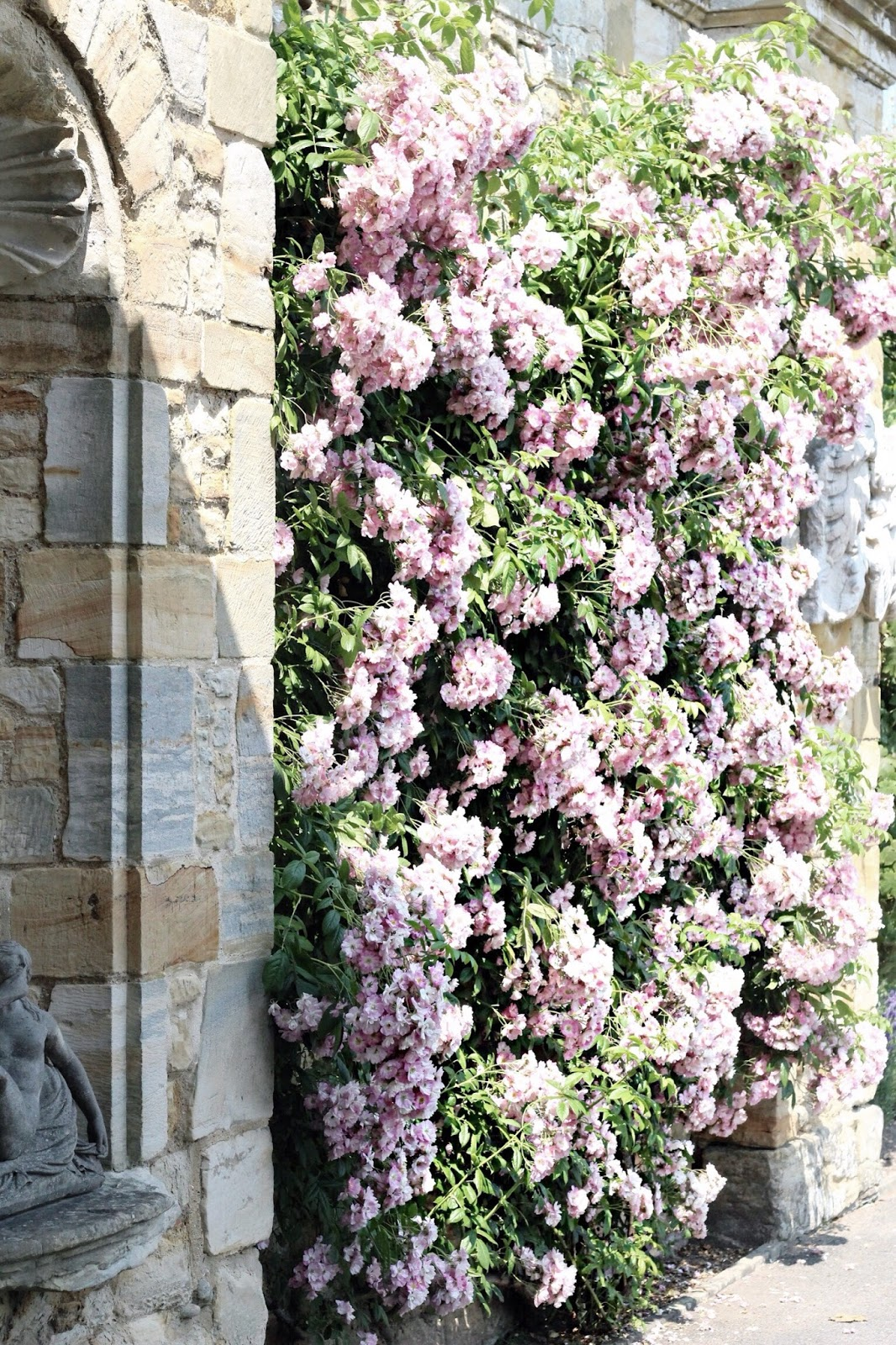Mass of Pretty Pink Flowers on Wall