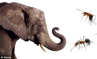 Semut dan gajah