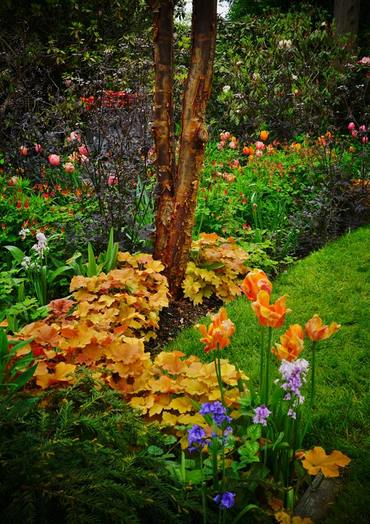 Heuchera 'Caramel' y Anthriscus sylvestris 'Ravenswing'