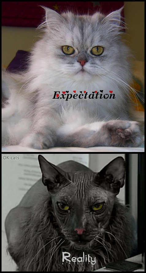 Photoshopped Cat picture • Get a cute ♥ Kitty they said • Expectation vs. Reality, haha huge FAIL