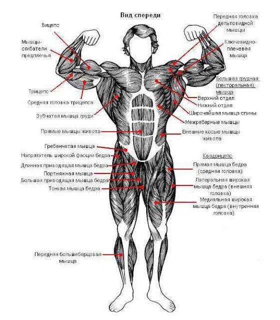 Гимнастика АИС - упражнения