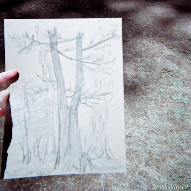 Camp Grounded - my drawing of a tree