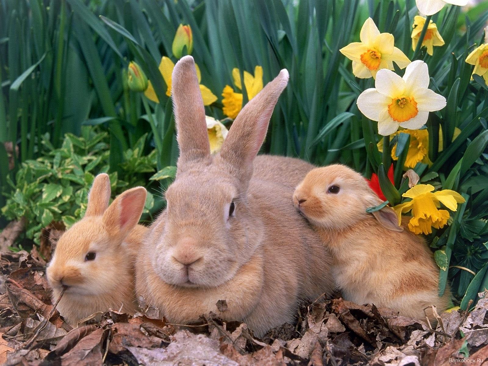 Tierna fotografia de familia de conejos beige