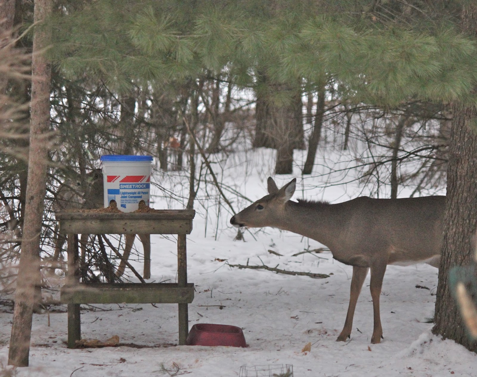bucket own youtube for your feeder deer build watch