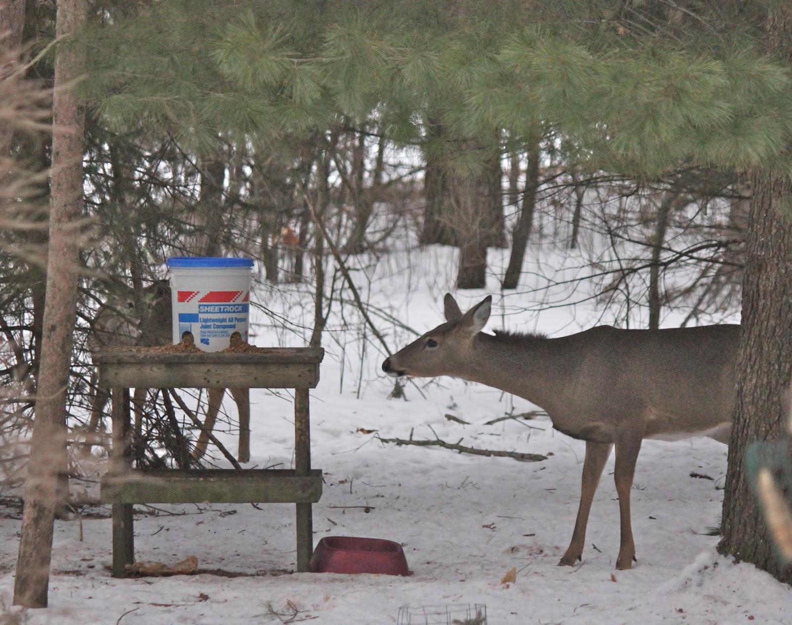 youtube watch own build bucket deer for your feeder