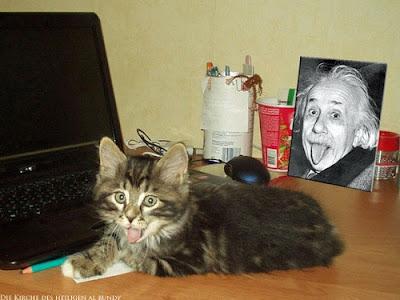 Spassbild Katze und Einstein zeigen Zunge lustig