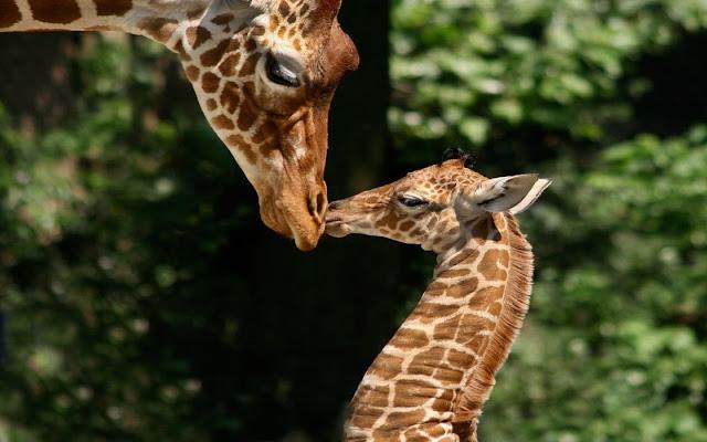 Visit Artis Royal Zoo in Amsterdam
