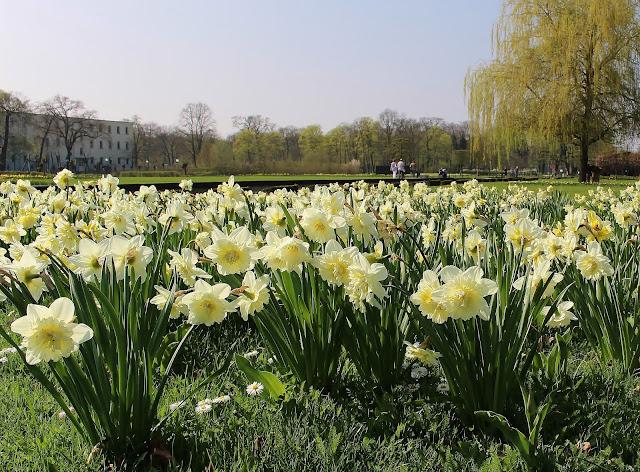 Frühlingsblüher Schlosspark Oranienburg