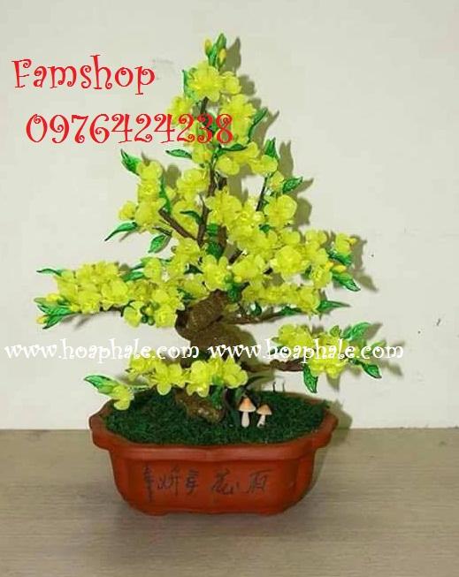 Goc bonsai cay hoa mai o Bo De