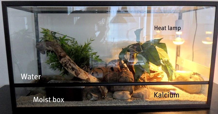 snow leos leopard gecko terrarium. Black Bedroom Furniture Sets. Home Design Ideas