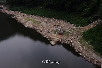栃木県 湖沼 日本の風景