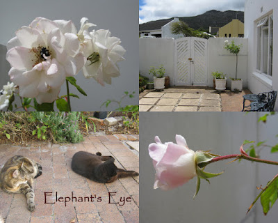 December 2014 Iceberg roses and cats
