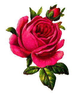 botanical art rose illustration
