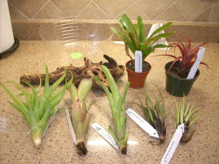 accessories terrarium tropical plants interior. Black Bedroom Furniture Sets. Home Design Ideas