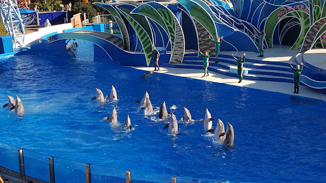 sea-world-dolphins