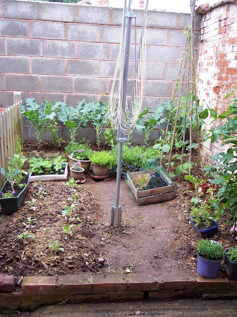 tiny vegetable plot