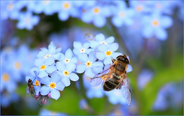 Worte die Blume beinhalten, Bienen Wörter, Seniorenarbeit, Aktivierungsideen, Betreuungsassistent