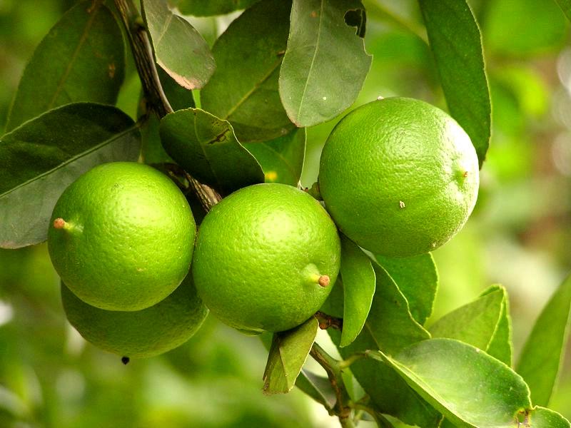 10 Manfaat Jeruk Lemon Untuk Diet