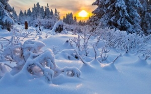 Desktop HD Wallpaper Winter Trees Snow
