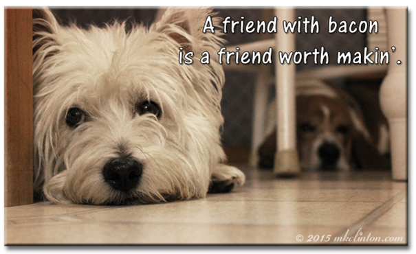 "Pierre Westie & Bentley Basset Hound meme ""A friend with bacon is a friend worth makin'."""