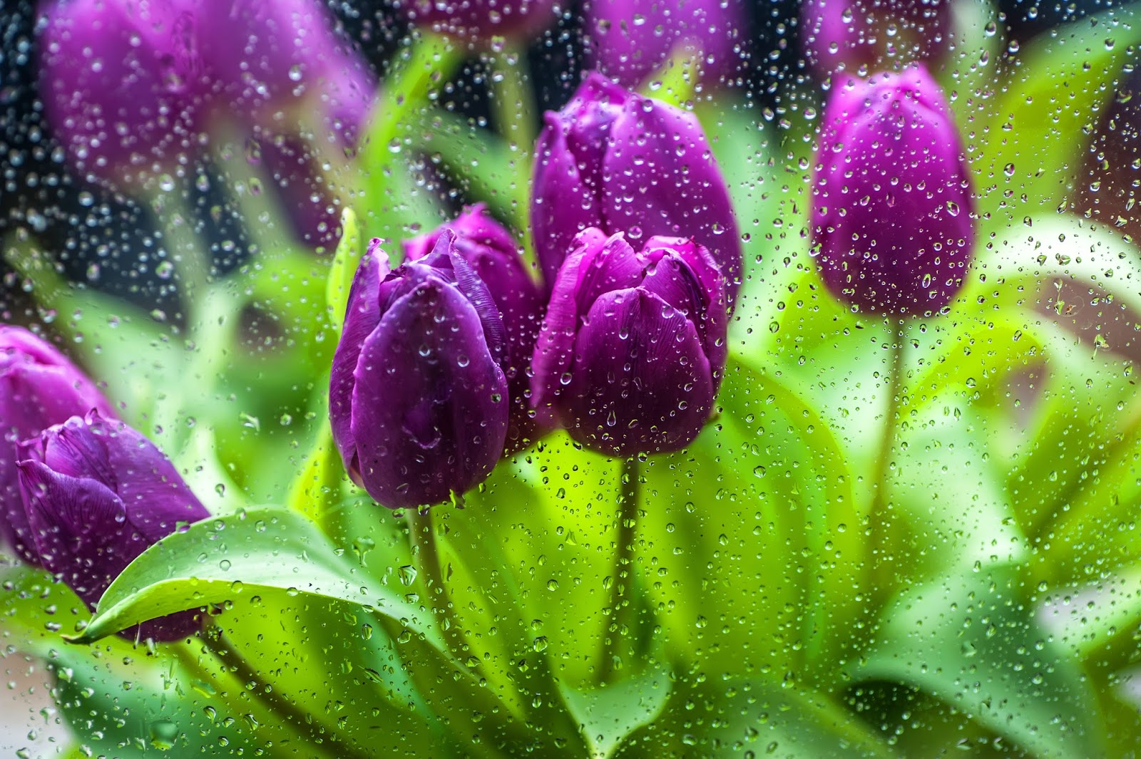 Gems in the attic april showers bring may flowers memories by april showers bring may flowers memories by joan reeves mightylinksfo