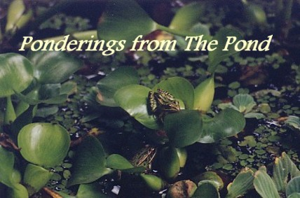 Ponderings From The Pond