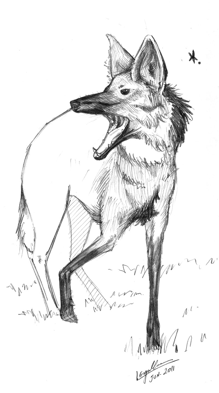 Desenhos Esgalha Animal Esgalha Lobo Guara
