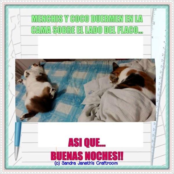 Gatos, Menchis, Coco, Buenas Noches