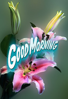 2019 Download Latest Good Morning Images With Flowers Kuch Khas Tech