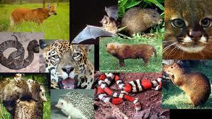 Animais Diversos