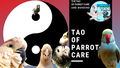 tao of parrot care and bonding with your parrot
