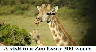 A visit to a Zoo Essay 300 words