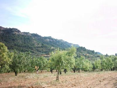 La pileta, camino, pantano de Pena, embalse, finca, almendros, olivos 2