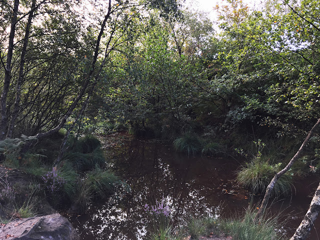Pool on Ashdown Forest, 31 August 2017.