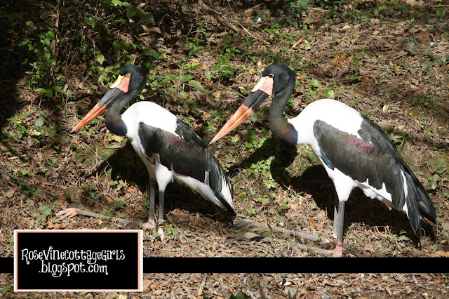 Saddle Billed Stork By Rosevine Cottage Girls