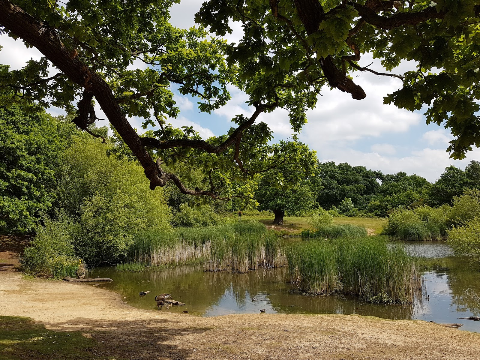 pond at epping forest